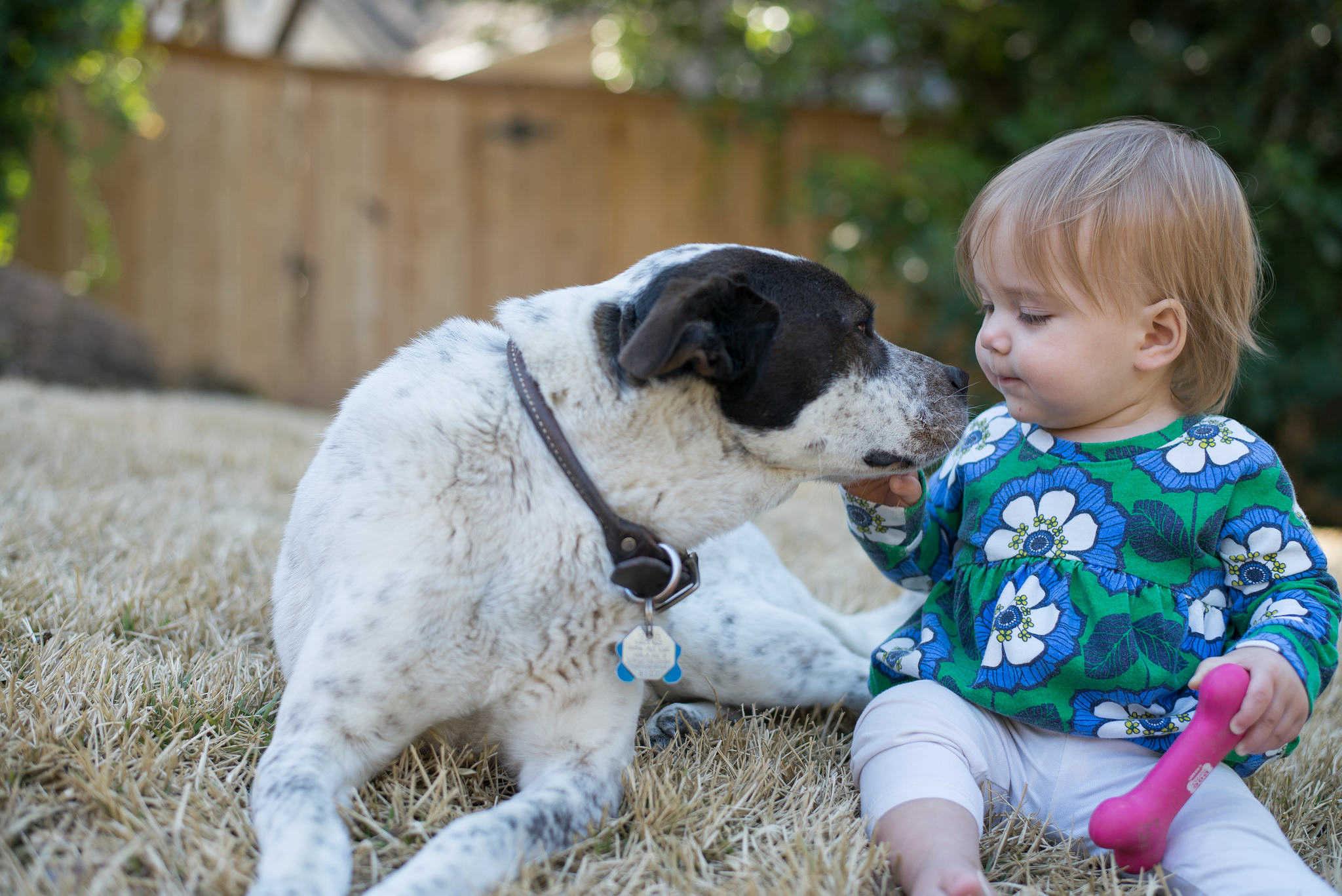 Dziecko i pies - jak uniknąć problemów
