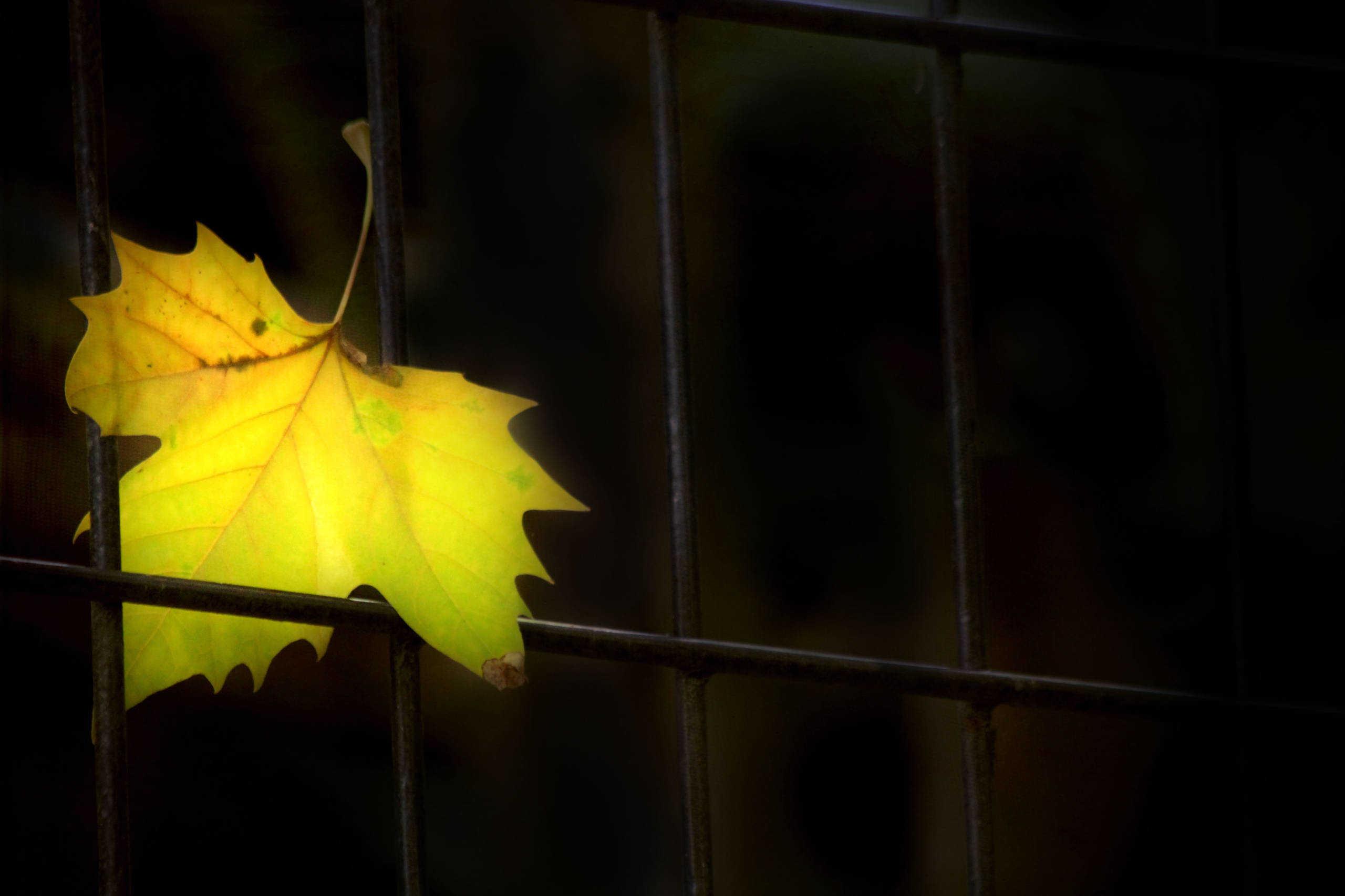 jesienny liść zaczepiony o kratę